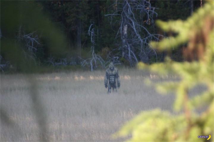 Идешь такой по лесу...