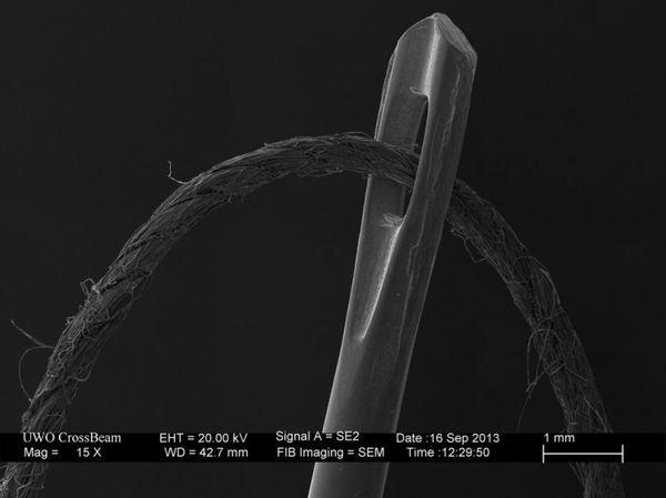 Интересности под микроскопом