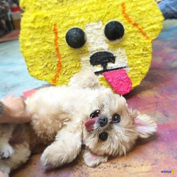 Смешной пёс Марни