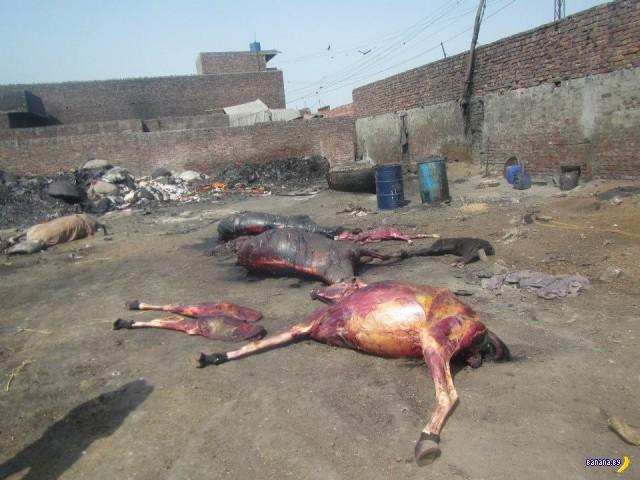 Жирный бизнес в Пакистане