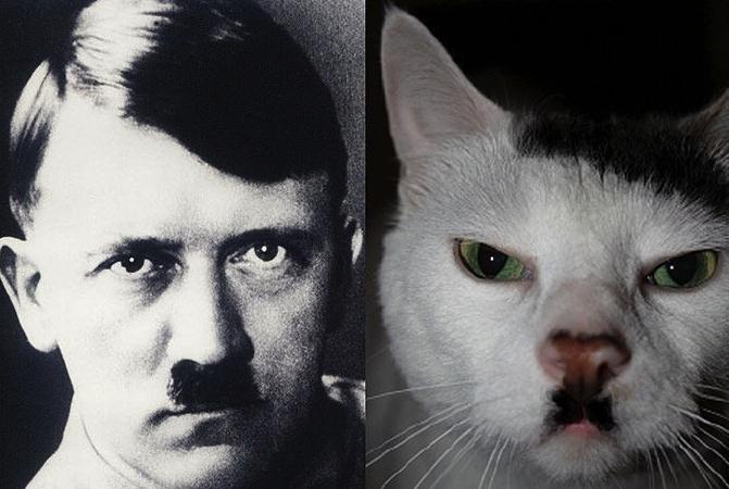 11 признаков того, что ваш кот - Гитлер