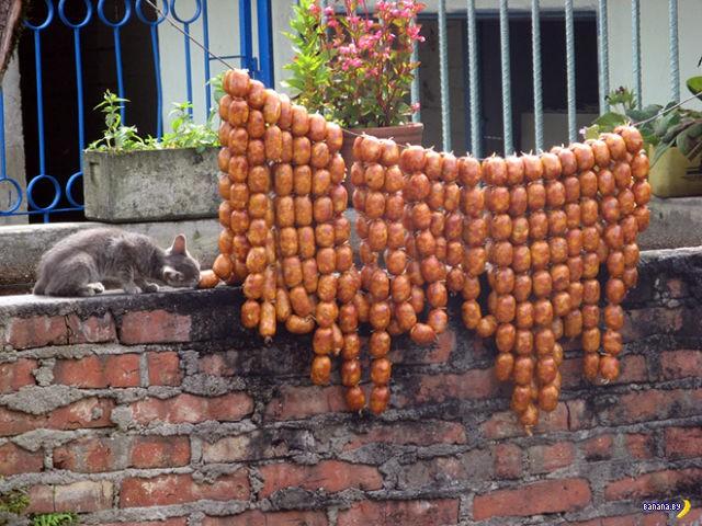 Какой кот еду не крадёт?