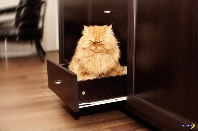 Самый злой кот в мире