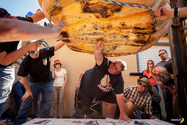 Выставка тыкв в Калифорнии