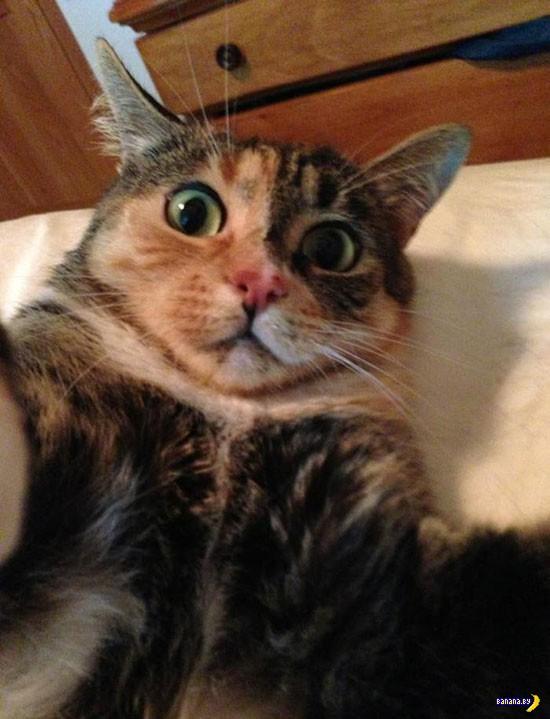 Коты делают селфи!