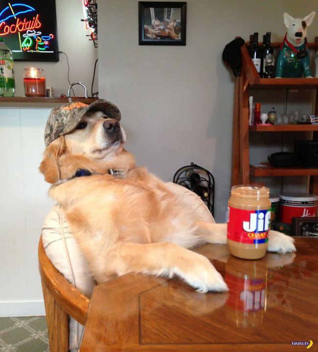 Пёс Бэйли умеет всё!