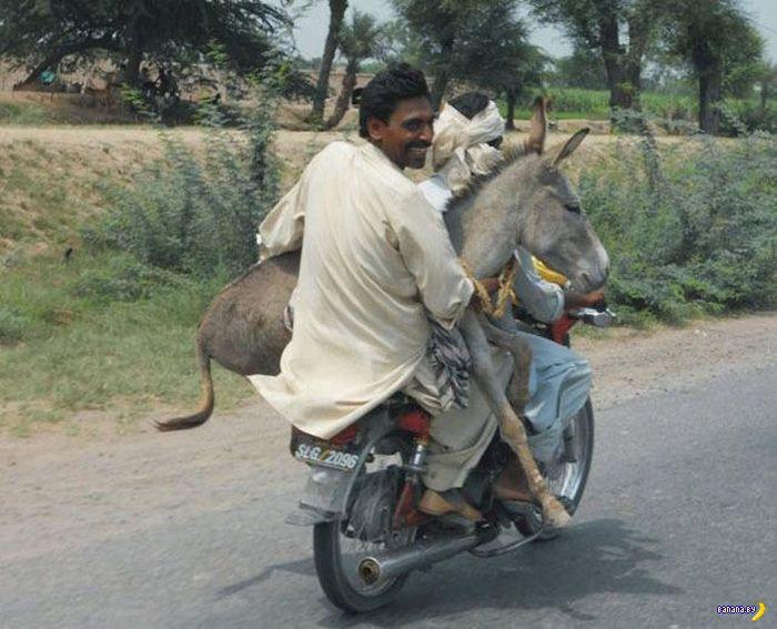 А тем временем в Индии - 1
