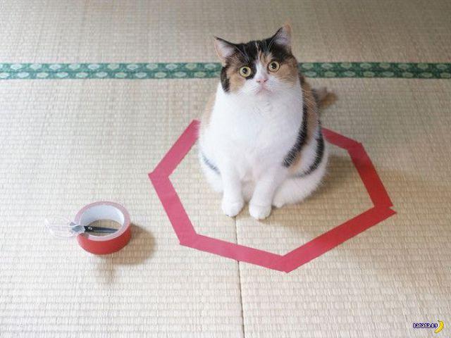 Странная привычка у котов