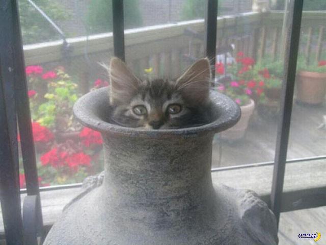 Коты в засаде