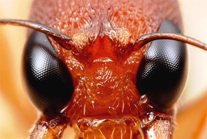 15 фактов о муравьях