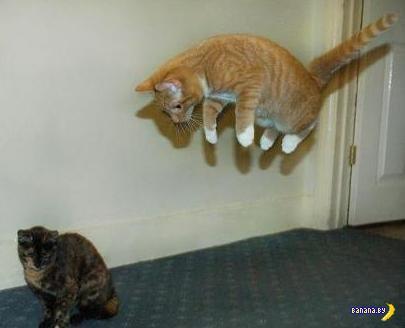 Коты против гравитации