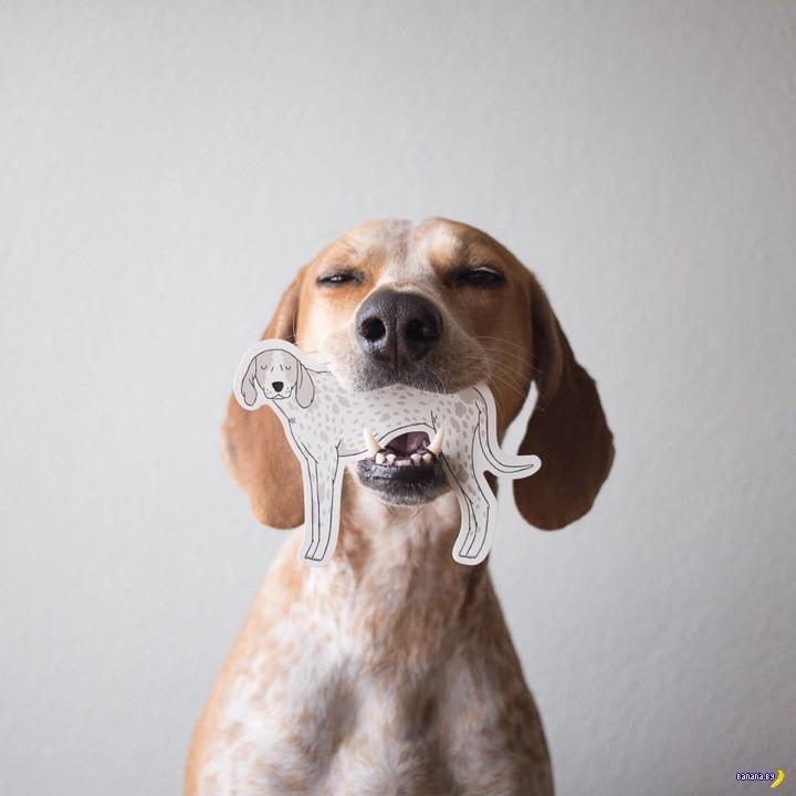 Жил-был пёс...