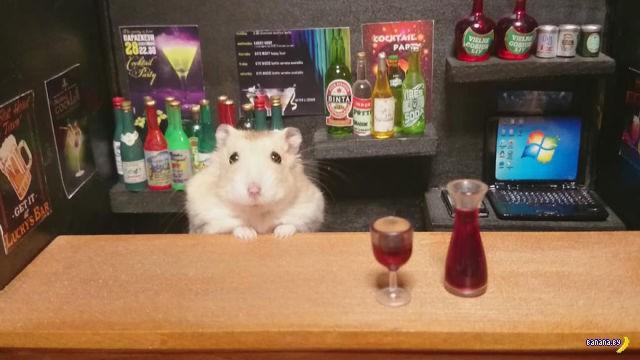 Хомяки-бармены