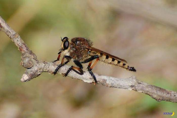 Монстры мира насекомых - ктыри