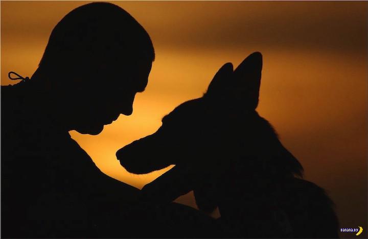 Пёс и сука