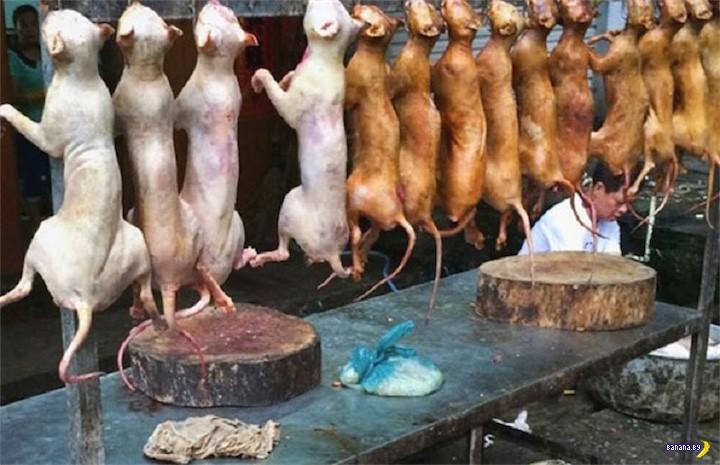 Собачье мясо разрешили подавать в Америке