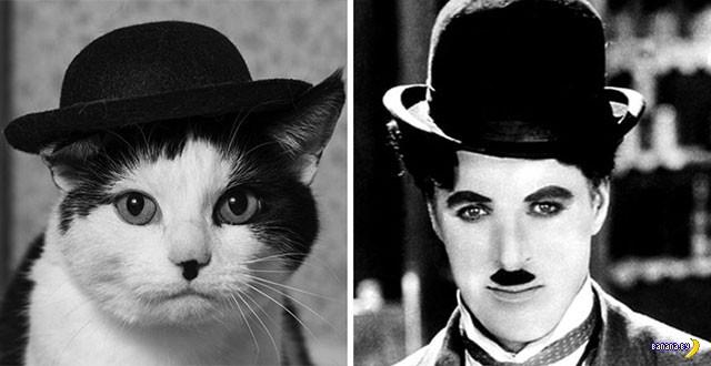 Подозрительно похожие коты...