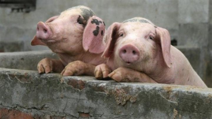 Россия против белорусского мяса и молока?!