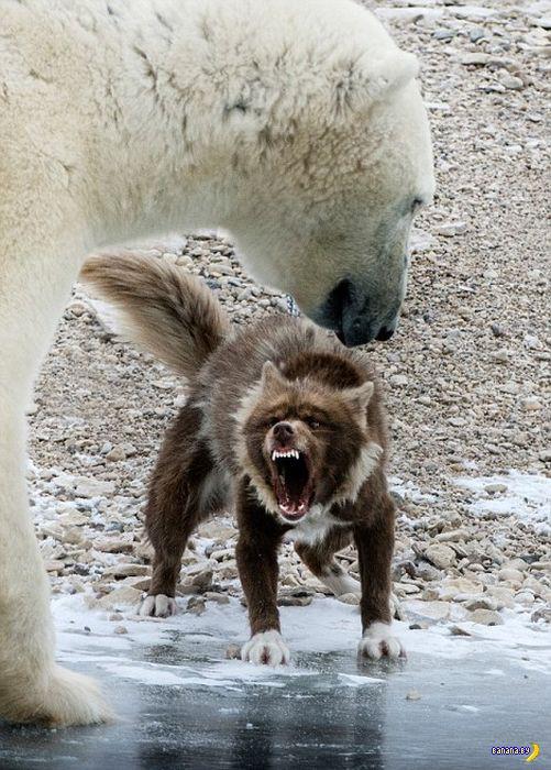 Смелый пёс?