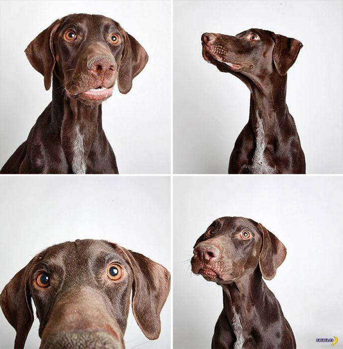 """Проект """"Фотобудка"""" и бездомные собаки"""