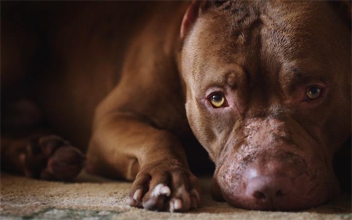 Отказаться от «опасных собак»