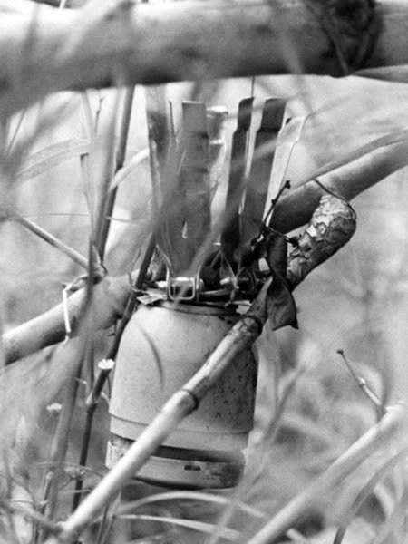 Жуткие вьетнамские ловушки