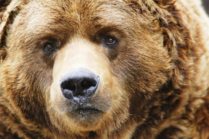 Медведь жив! (обновлено)