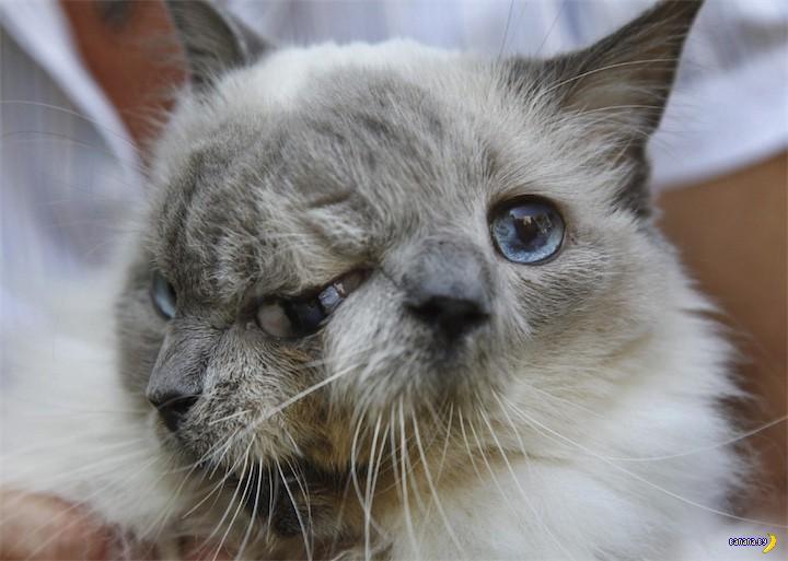 Умер двухмордочный кот