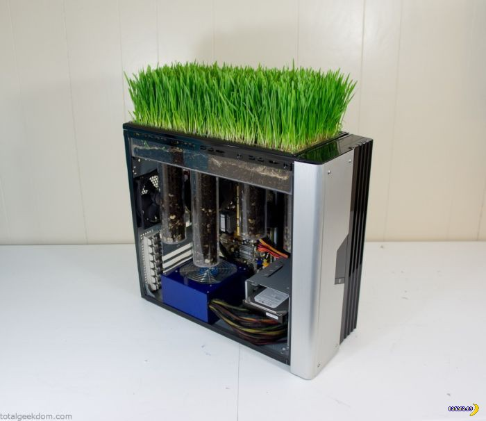 Теперь еще и трава!