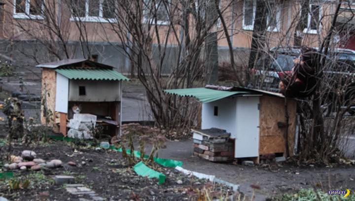 Коттеджи для бездомных котов