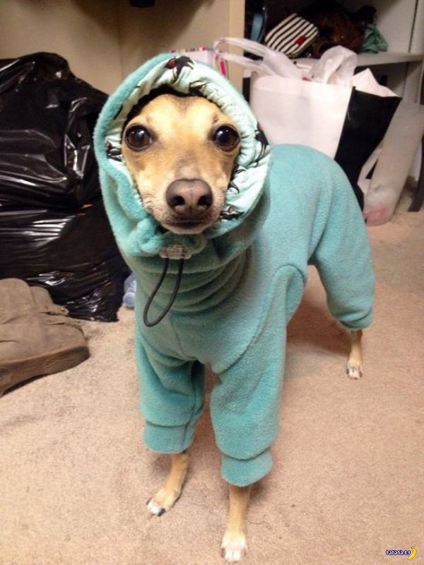 Домашние животные и тепло