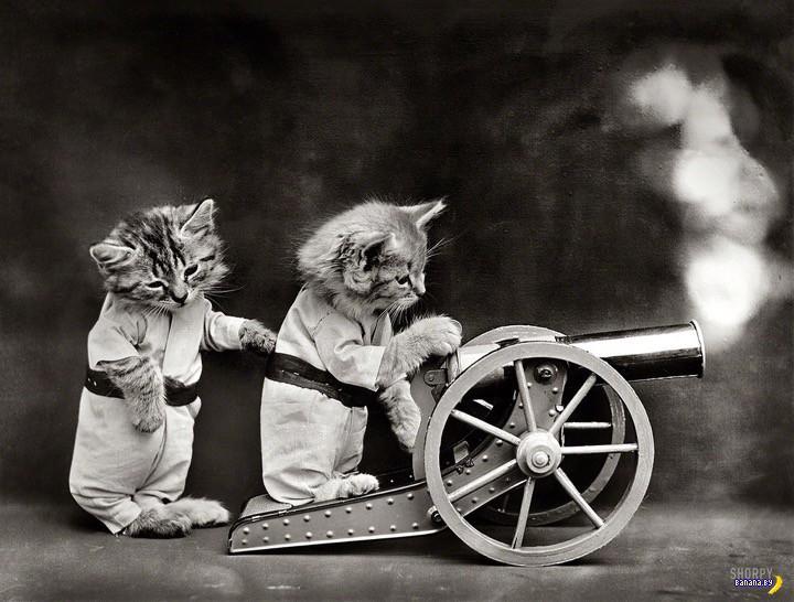 Винтажные котики