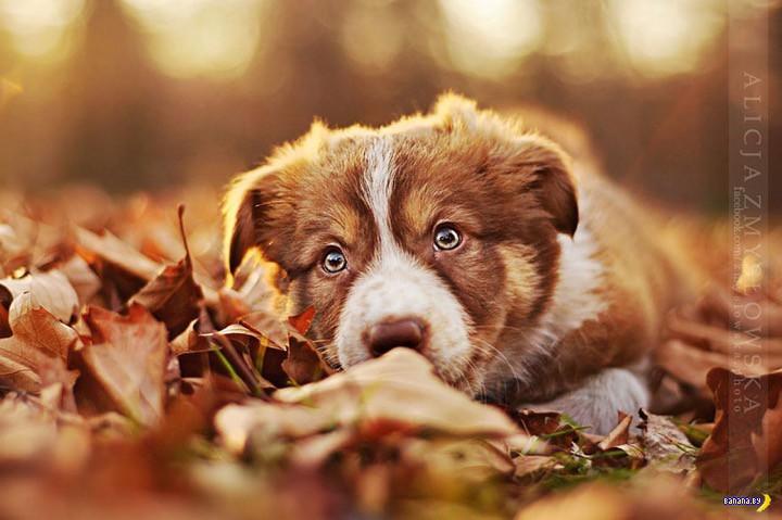 Изумительные собаки на фото!