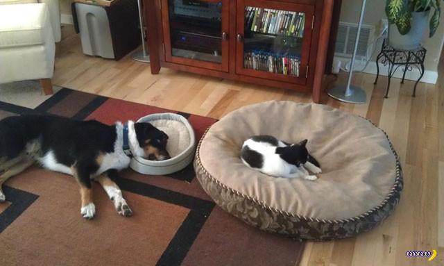 Коты или собаки?