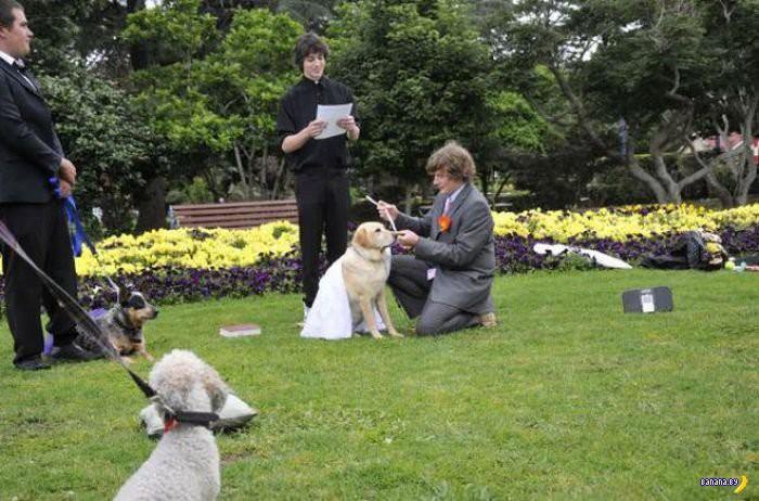 Самые странные свадьбы