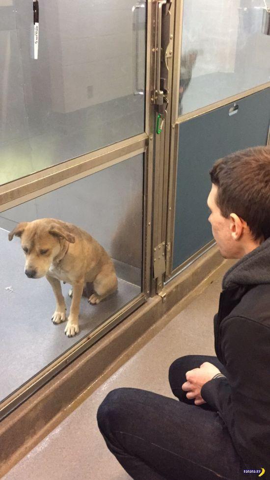 История одного пса