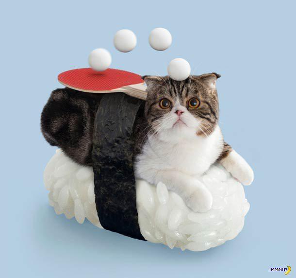 Neko-Sushi! 寿司猫!
