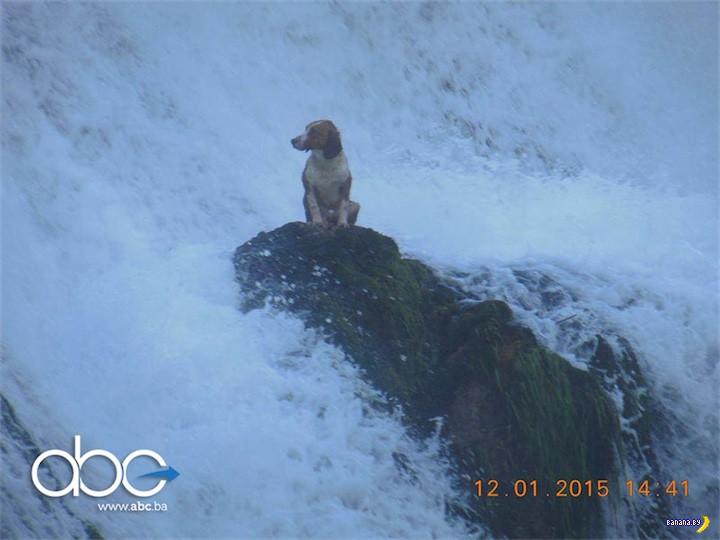 Самый несчастный пёс в мире