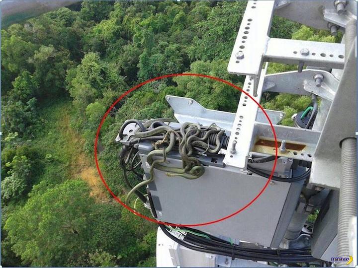 Неприятности в работе ремонтника ЛЭП