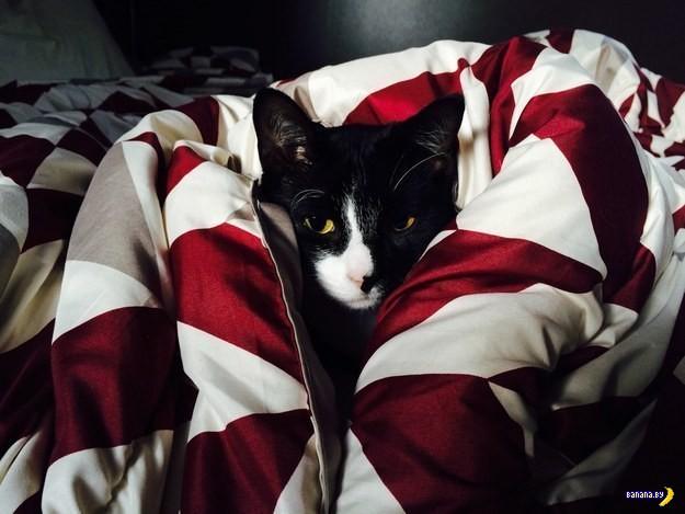 Уютные коты