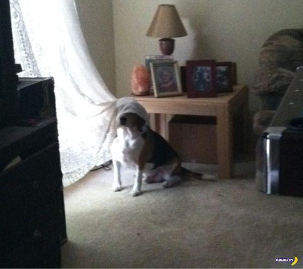 Найди собаку на фото!
