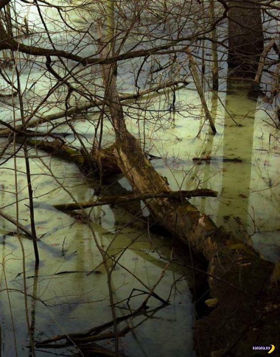 Находка в болоте