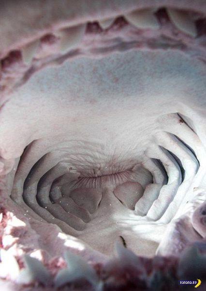 Заглянул в пасть акуле