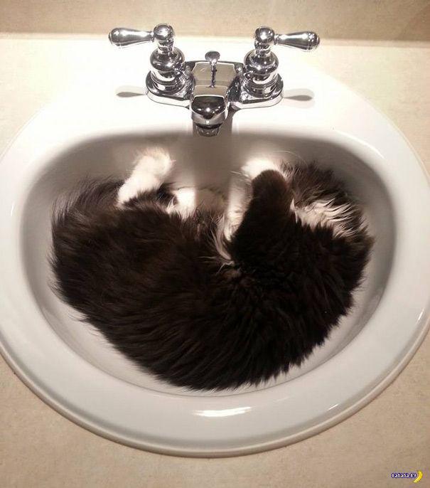 Самый демонический кот в мире