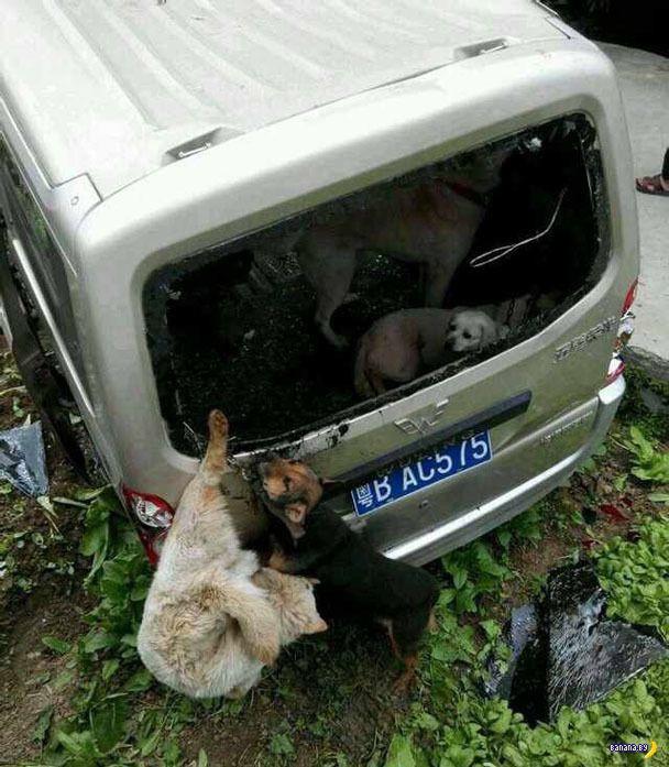 Месть за собак
