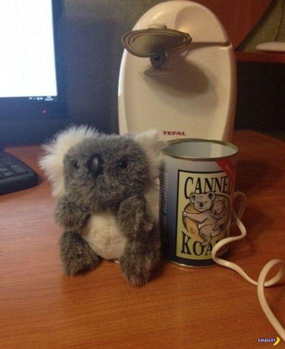 Кто пробовал консервы из коалы?