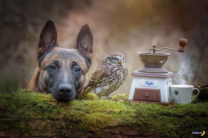 Странная дружба