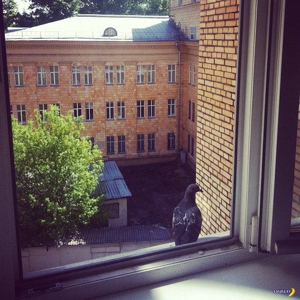 Роскомнадзор и личные фото в Инстаграм