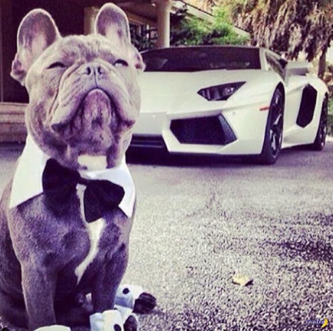 Богатые собаки Инстаграма