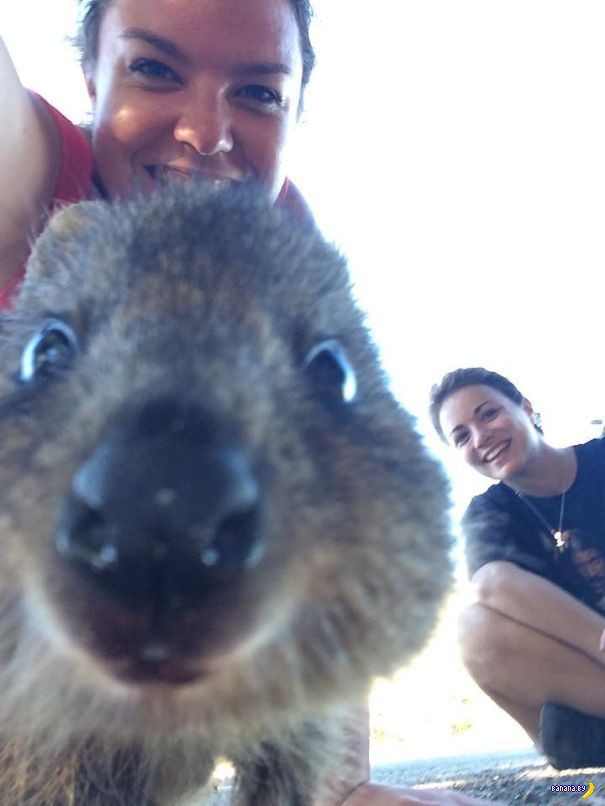 Селфи-тренд из Австралии